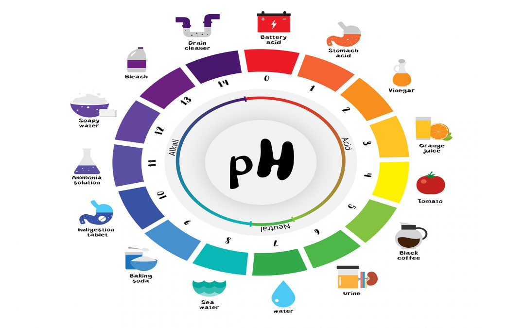 Understanding Body pH: Should I Switch To An Alkaline Diet?