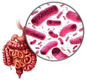 gut microbiota | Activated You