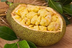 jackfruit | Activated You