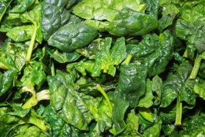 savoy spinach | Activated You