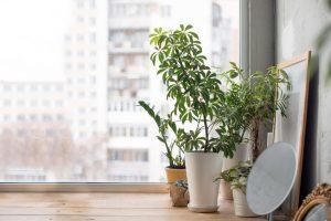 indoor plants   ActivatedYou
