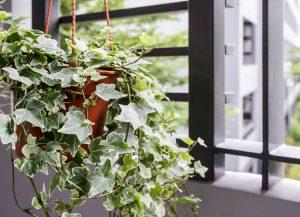 plants that remove toxins   ActivatedYou