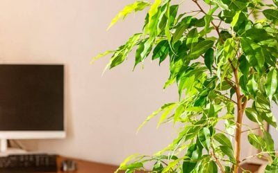 Plants That Help Remove Toxins To Improve Air Quality